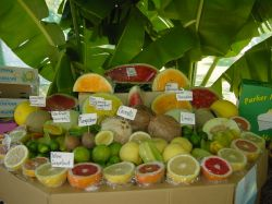KPIA Fruit Stand